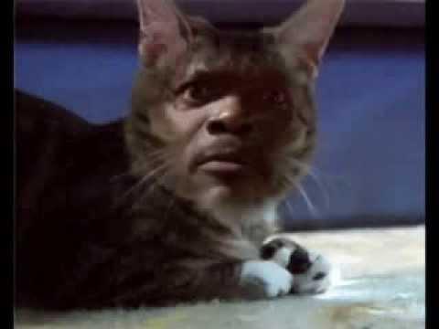 Samuel l jackson sameow l catson youtube for Jackson galaxy cat toys australia