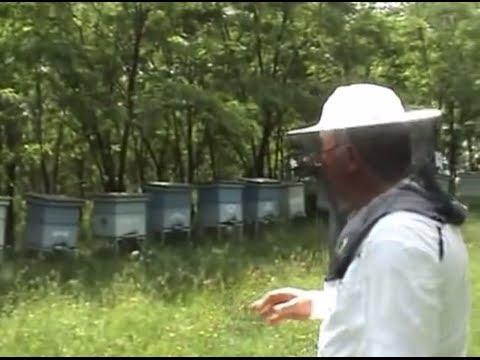 Lucrari de vara la stupina | Sfaturi utile apicultori Apicultura pentru incepatori cu Proful Online