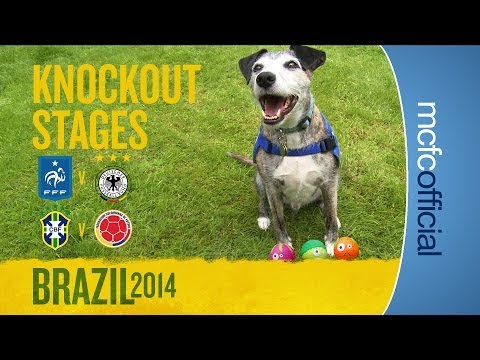 DOUGIE THE DOG PREDICTS | France & Brazil Quarter Finals | World Cup Predictions