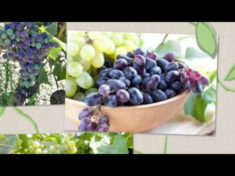 healthy fruits salad recipes what was the forbidden fruit in the garden of eden