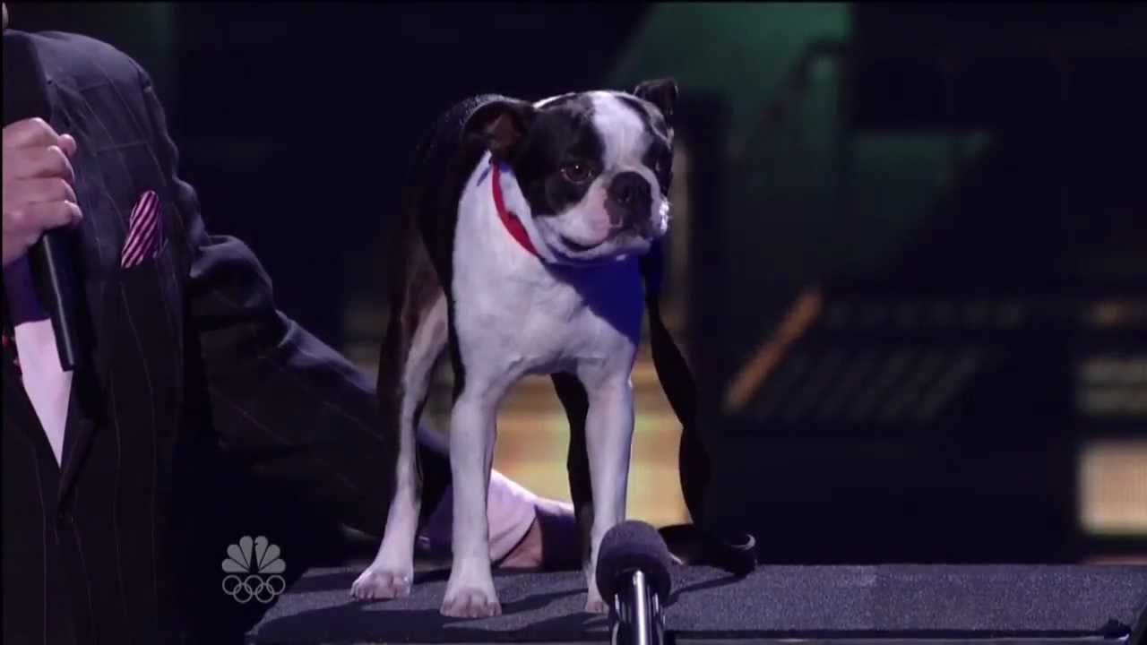 America S Got Talent Dog Talking