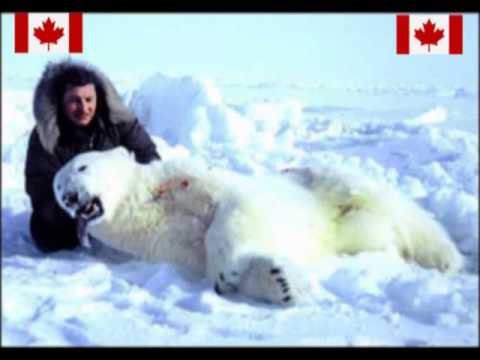 Canada's polar bear killing shame