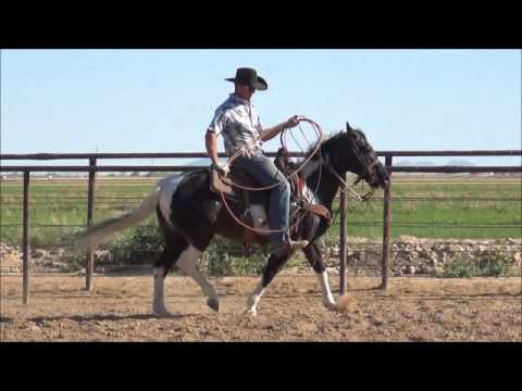 Tuffy - 10yo Black & White Paint Pony Heel Horse For Sale