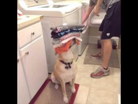 Pas je uvek tu da pomogne