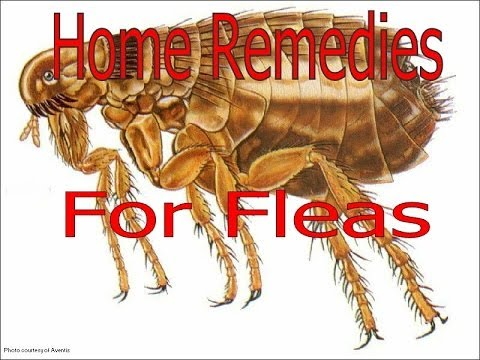 advantage flea treatment instructions
