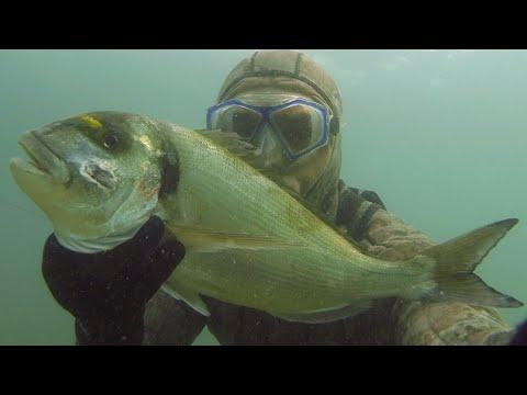 Podvodni ribolov Orada 2kg Duvo