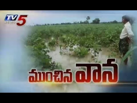 Unseasonal Rains Destroyed Crops in Medak