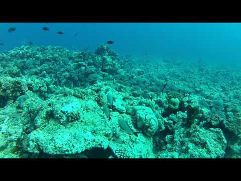 Marine sea life - Scuba diving at Turtle nest near Kavarati Lakshdweep India