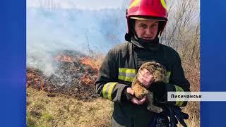 Рятувальники закликають берегти екосистему