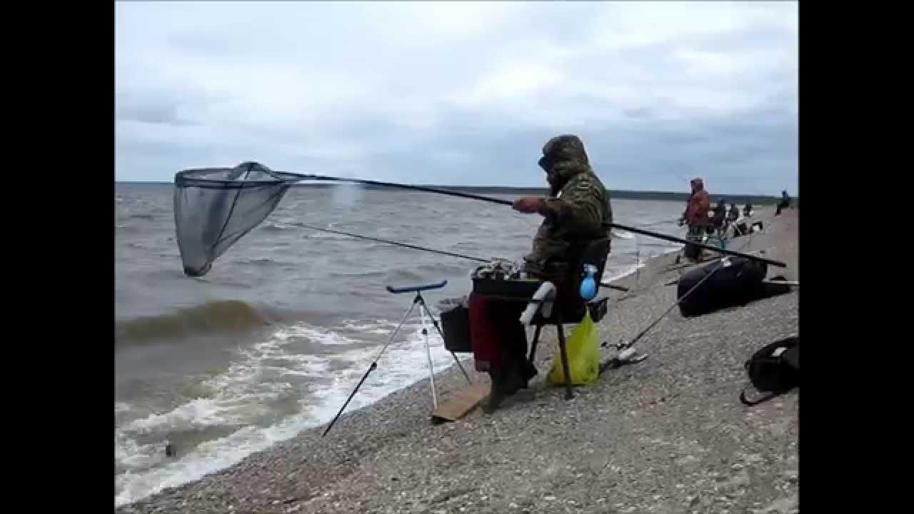 ловля на фидер на рыбинке видео