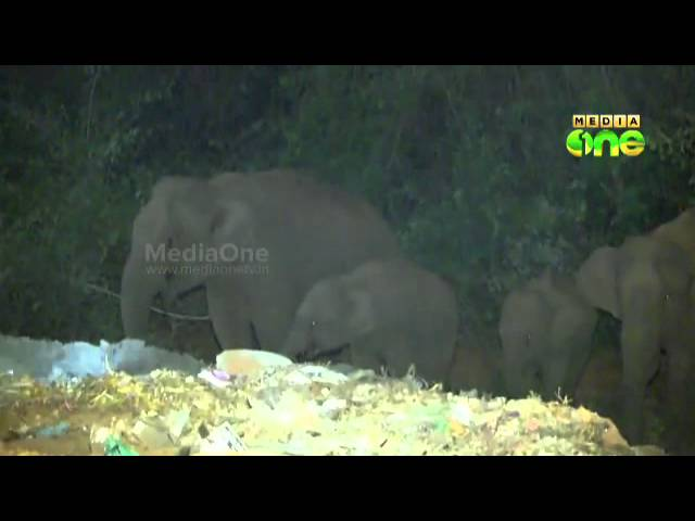 Wild elephants create panic at Sabarimala