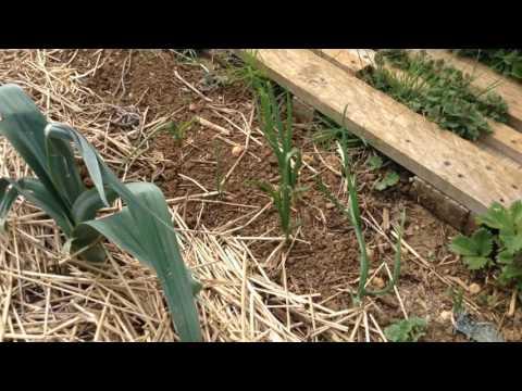 🌦 #17 - Permaculture en Lorraine (Mai 2017) - [ Visite du jardin ] 🌦