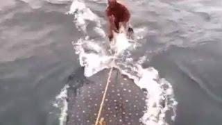 ジンベエザメでサーフィン