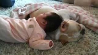 French bulldog, MIRCO #170 ボクはマクラじゃないよ view on youtube.com tube online.