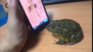 Kandırılan Kurbağanın intikamı Kötü Oldu