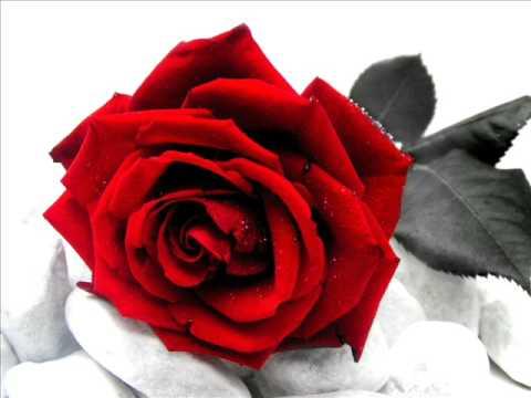 Villaggio delle Ginestre: Rose rosse per te, Angelo