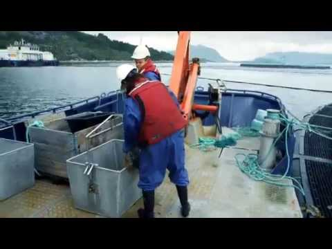 The Global Salmon Initiative – GSI is launched