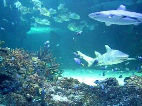 the carnival of the animals aquarium
