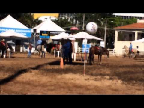 Nacional do Cavalo Mangalarga Marchador 2014 - Noviça Jota Esse