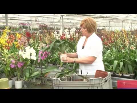 Wooning orchideeen