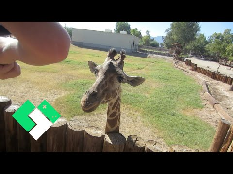 WILDLIFE WORLD ZOO (10.16.13 - Day 565)