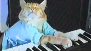 Charlie Schmidt's Keyboard Cat! THE ORIGINAL!