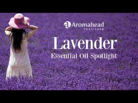 Lavender Essential Oil Spotlight