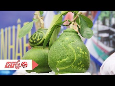 Chiêm ngưỡng trái bưởi Tết giá 1,3 triệu đồng | VTC
