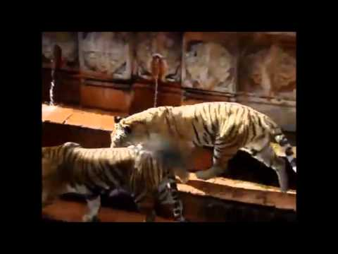 Funny Animals Jerks Better Than Pranks Funny Cats And Dogs Videos