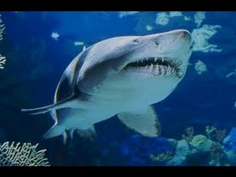 BEST 3D SHARK VIDEO