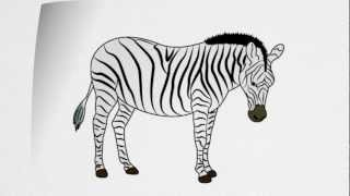 How To Draw A ZEBRA Step By Step
