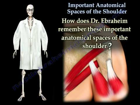 Important Anatomical Spaces Shoulder Anatomy 2 - Everything You Need To Know - Dr. Nabil Ebraheim