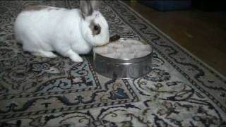 Bunny Rabbit Steals Cookies
