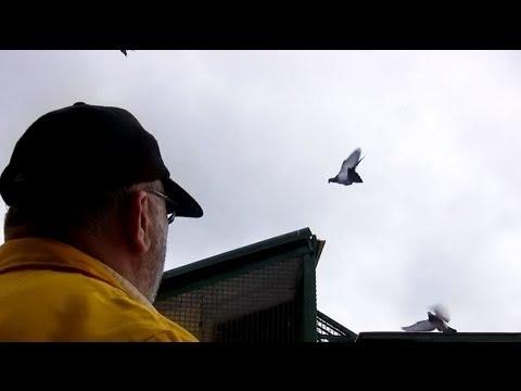 Kod Adı : Şampiyon - Posta Güvercinleri ve Yarışları - Bölüm 2/4