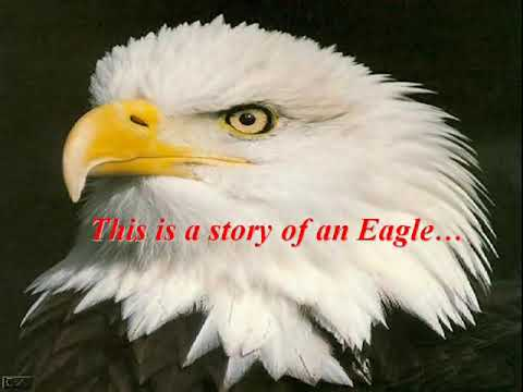 eagle inspirational quotes about life