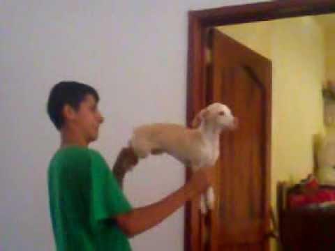 El perro metralletas