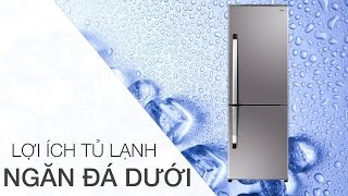 Lợi ích bất ngờ của tủ lạnh ngăn đá dưới   Điện máy XANH