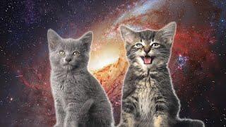 Смотреть или скачать клип Space Cats - Magic Fly