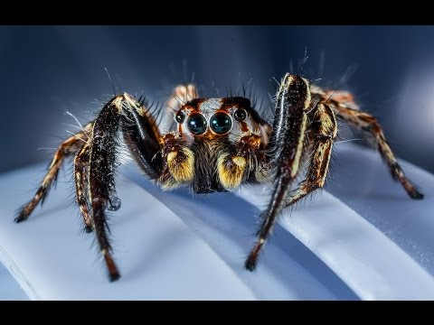 10 Facts About Spiders