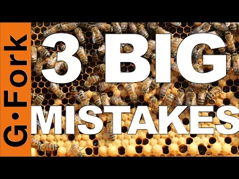 3 Mistakes Beginning Beekeepers Make - GardenFork
