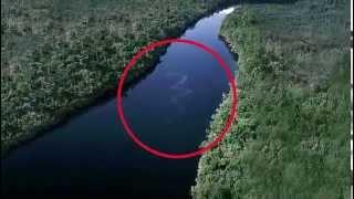 Encuentran En Malasia La Serpiente Más Grande Del Mundo