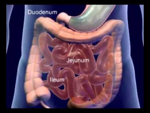 Imagens do corpo humano anatomia