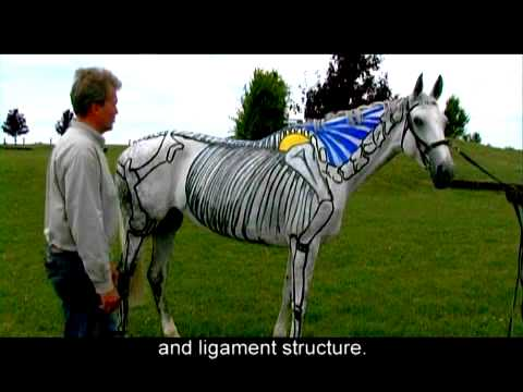If Horses Could Speak - Hyperflexion