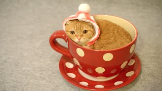 Kucing lucu ini masuk ke Gelas Teh