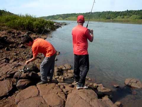 O maior peixe armado do rio Paraná.mov