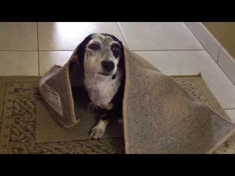 Cachorros Engraçados, Funny dogs