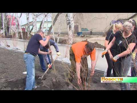 В поселке Чернореченский появилось несколько десятков кустов спиреи