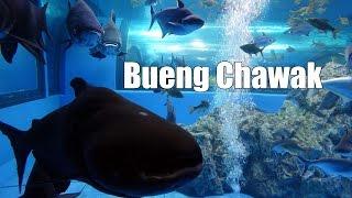 Bueng Chawak in Suphan Buri