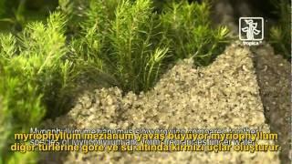 Akvaryuma bitki ekimi nasıl yapılır?