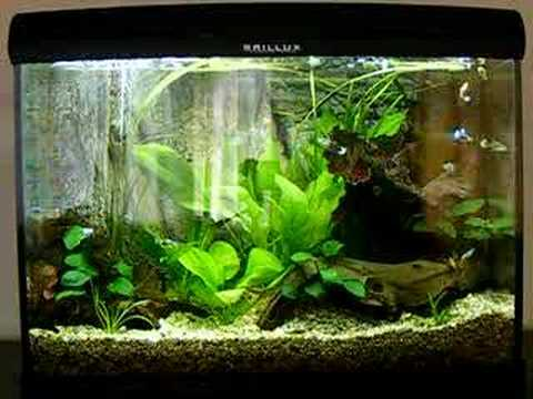 Back To Nature Guppy Tank Guppies Youtube